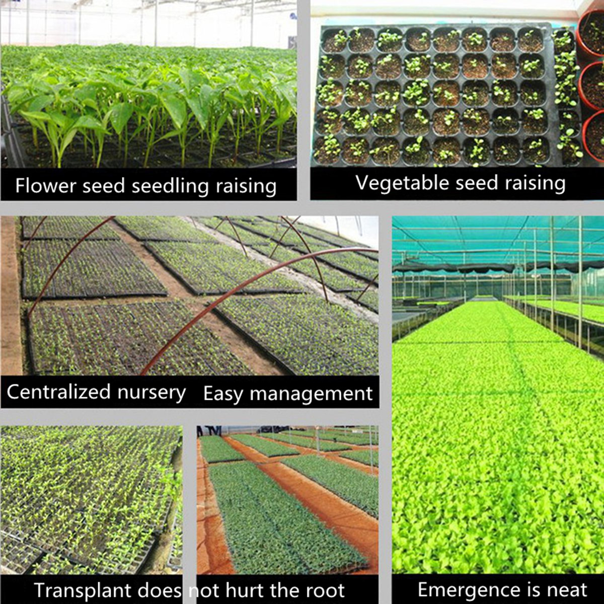 200 Cell Seedling Starter Trays For Seed Germination Plant US