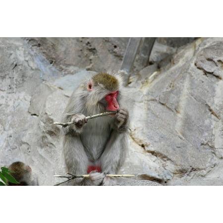 Framed Art for Your Wall Animal Monkey Family Zoo Monkey Baby Monkey 10x13 Frame (Monkey Frame)