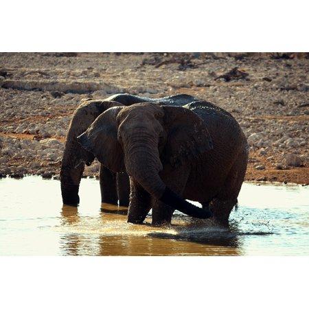 Peel-n-Stick Poster of Wild Animals Elephant Family Group Proboscis Poster 24x16 Adhesive Sticker Poster Print