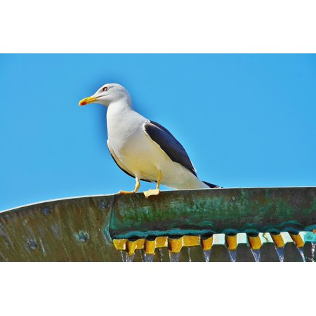 Canvas Print Sea Gull Building Bird Sky On Top Macro Clouds Stretched Canvas 10 x 14