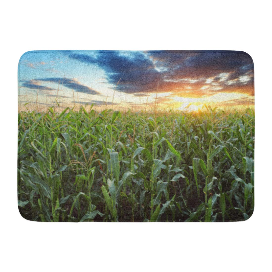 Godpok Crop Blue Cornfield Corn Field Green Sunset Farm