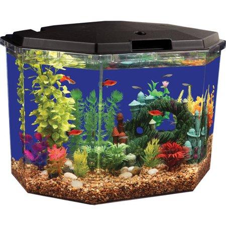 Aqua Culture 6.5-Gallon Aquarium Starter Kit with LED Lighting, Semi-Hex