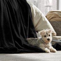 Bare Home Ultra Soft Microplush Velvet Blanket, Multiple Colors & Sizes