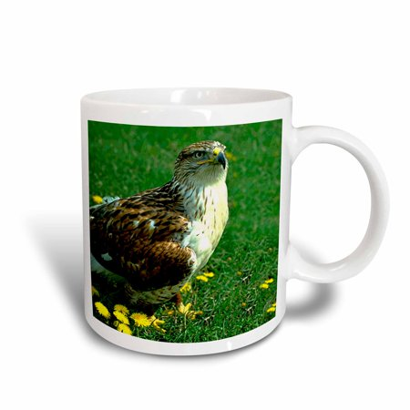 3dRose Feruginous Hawk, Ceramic Mug, 15-ounce