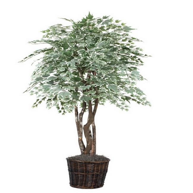 Silver Maple Executive Everyday Tree - 6 ft.