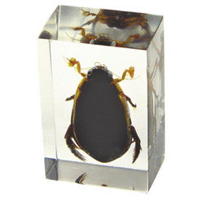 Ed Speldy East PW116 Small Paperweight - Great Diving Beetle