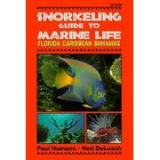 Snorkeling Guide to Marine Life Florida, Caribbean, Bahamas