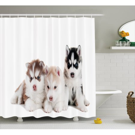 Alaskan Malamute Shower Curtain, Three Adorable Little Siberian Puppies Blue Eyes Friends Pedigree Image, Fabric Bathroom Set with Hooks, Multicolor, by Ambesonne