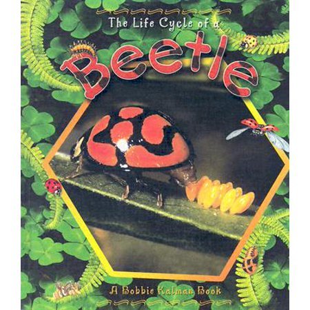 Beetle Insect Life Cycles