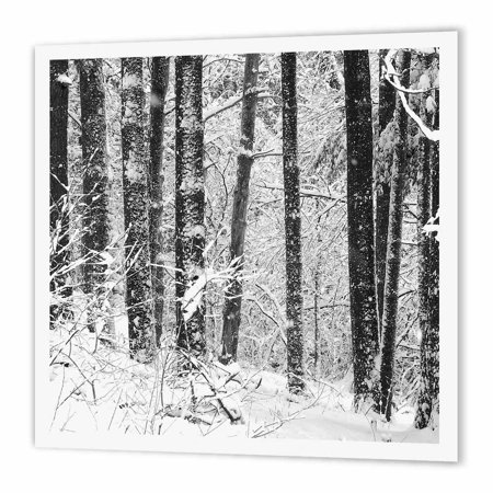 3dRose Winter Snow black and white photograph of Michigan pine forest covering in snow, Iron On Heat Transfer, 10 by 10-inch, For White Material