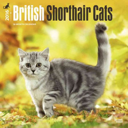 British Shorthair Cats 2016 Calendar
