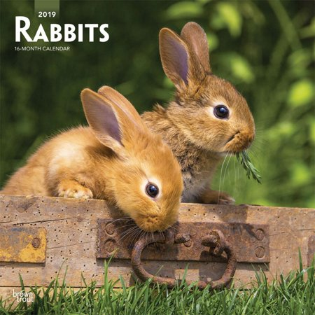 2019 Rabbits Wall Calendar, by BrownTrout