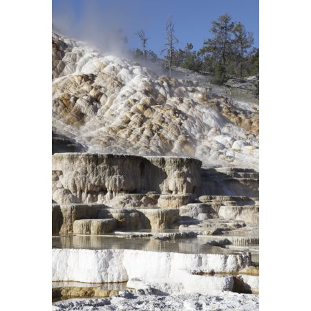 Terrace Yellowstone Park (Palette spring and travertine sinter terraces Mammoth Hot Springs Yellowstone National Park Stretched Canvas - Richard RoscoeStocktrek Images (12 x 18) )