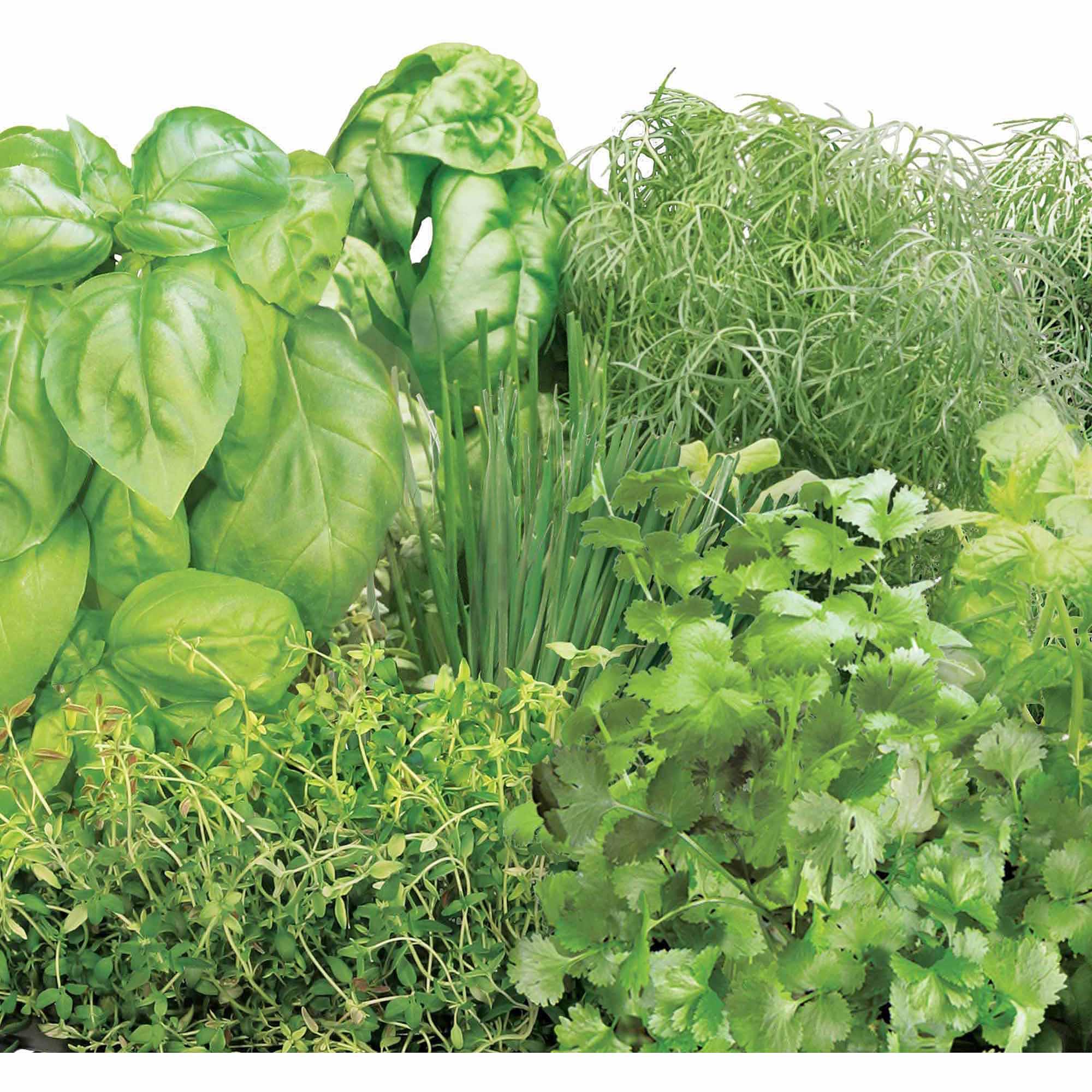 Miracle-Gro AeroGarden Gourmet Herb 7-Pod Seed Kit