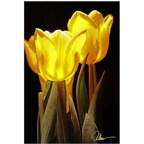 "Trademark Fine Art ""Yellow Tulips II"" Canvas Art by Martha Guerra, 16x24"