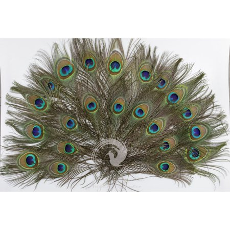 100pcs Natural Peacock Feathers About For Wedding Decoration Fashion Flower Arrangement 10-12 Inches](Day Of The Dead Flower Arrangements)