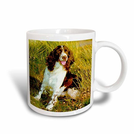 3dRose English Springer Spaniel, Ceramic Mug, - Springer Spaniel Gifts