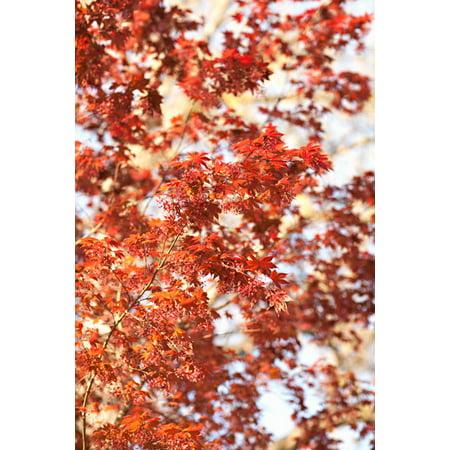 Fall Leaves, Fine Art Photograph By: Karyn Millet; One 24x36in Fine Art Paper Giclee Print
