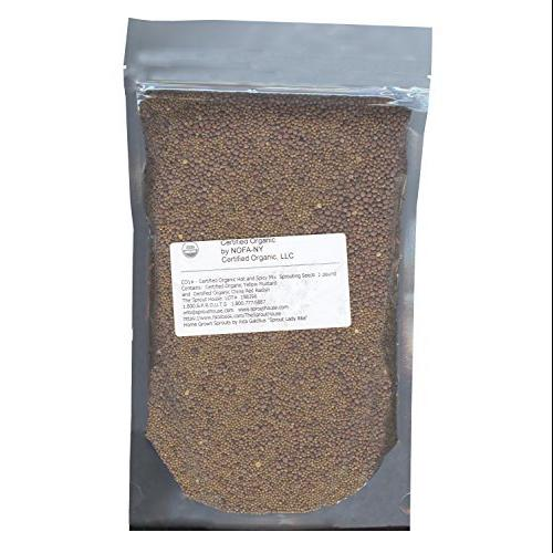 HOT and Spicy 1 lb Organic Sprouting Seeds -Yellow Mustard & Red Radish