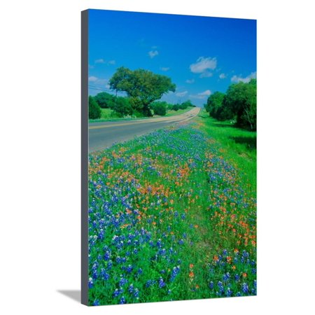 Field of bluebonnets in bloom Spring Willow City Loop Rd. TX Stretched Canvas Print Wall Art - Halloween Store Spring Tx