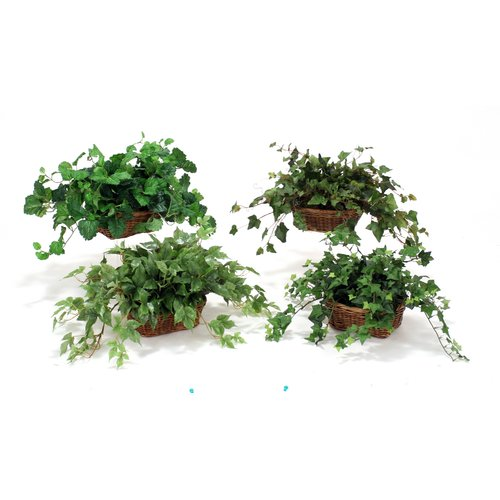 Distinctive Designs Assorted Ivy and Pittosporum Desk Top Plant in Basket Set (Set of 4)