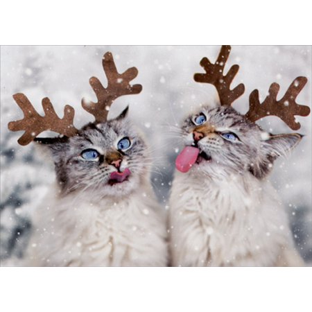 Avanti Press Reindeer Cats Catching Snowflakes Box of 10 Christmas Cards