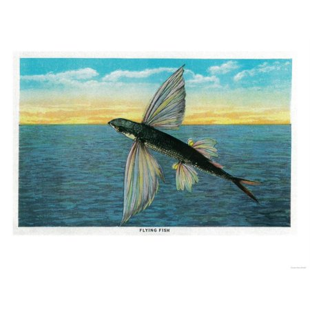 Flying Fish at Catalina Island - Catalina Island, CA Print Wall Art By Lantern (Catalina Island Fish)