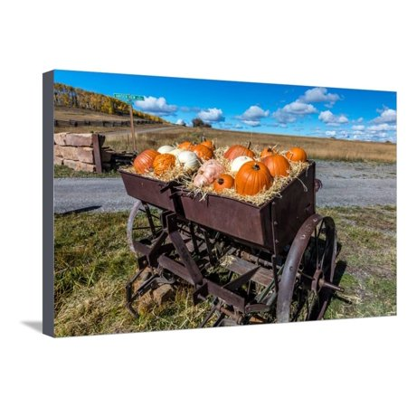 Display of Halloween Pumpkins, Hastings Mesa, Colorado - near Ridgway Stretched Canvas Print Wall - Halloween Store Colorado