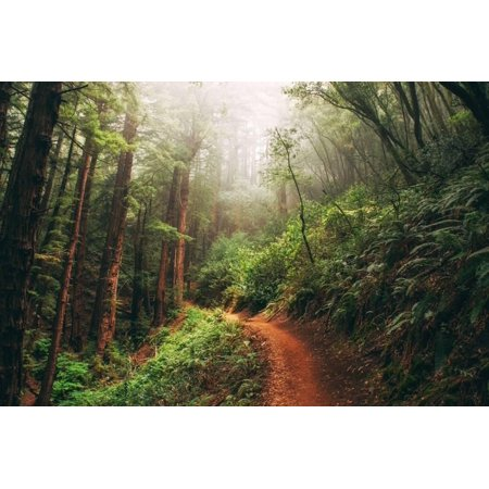 Amazing Misty John Muir Woods Coastal Trail, San Francisco Bay Area Print Wall Art By Vincent (Best Trails In Bay Area)