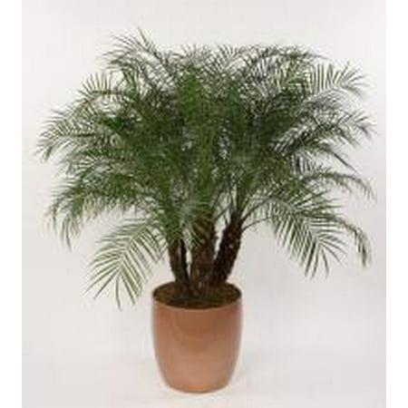 Image of 6.51g Palm Landscape Asst