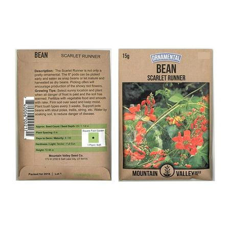 Scarlet Runner Pole Bean Seeds - 15 Gram Packet - Non-GMO, Heirloom - Vegetable Garden Seeds - Also Called: White Dutch