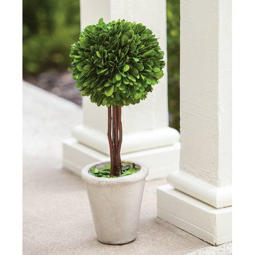 Charlton Home Floor Boxwood Topiary in Pot