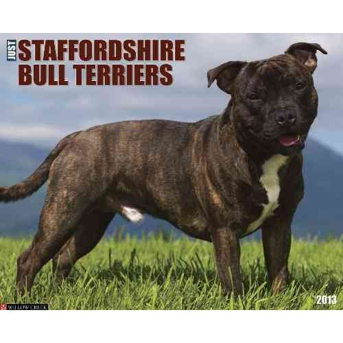 Just Staffordshire Bull Terriers
