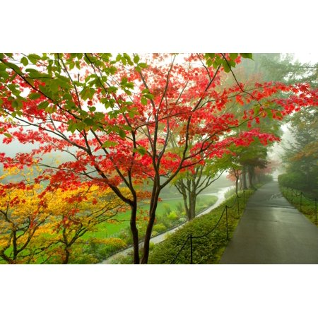Trees along a garden path Victoria Vancouver Island British Columbia Canada Stretched Canvas - Panoramic Images (36 x 12) (Victoria Gardens Com)