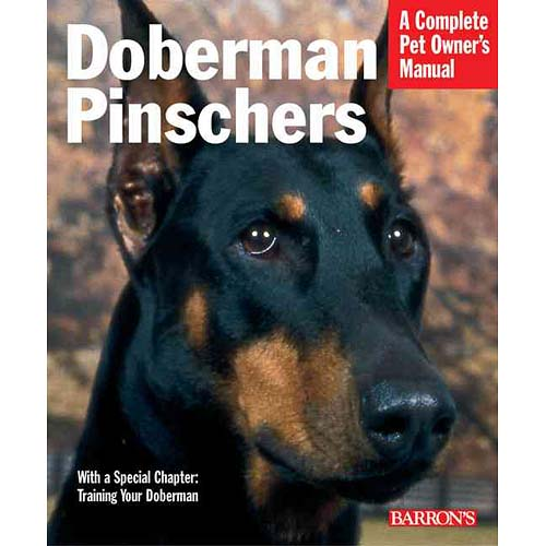 Doberman Pinschers: Everything about purchase, care, nutrition, training, and behavior