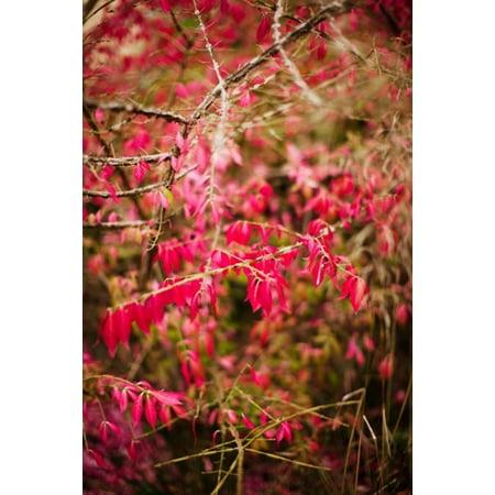 Close-up of a plant in a garden in autumn Musee de lEcole de Nancy Nancy Meurthe-et-Moselle Lorraine France Canvas Art - Panoramic Images (24 x (Centre De Table D'halloween)