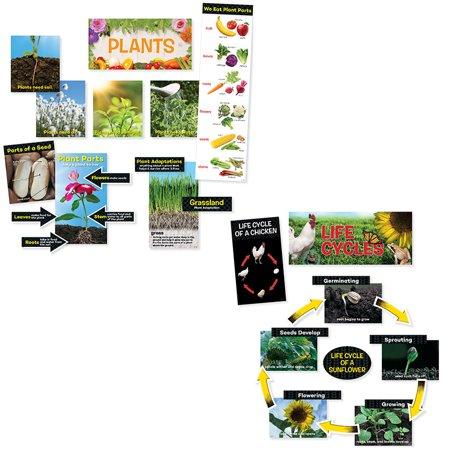 SCIENCE MINI BULLETIN BOARD PACK - Cute Bulletin Board Ideas For Halloween