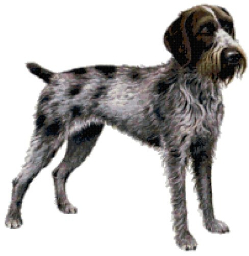 German Wirehaired Pointer Dog Counted Cross Stitch Pattern