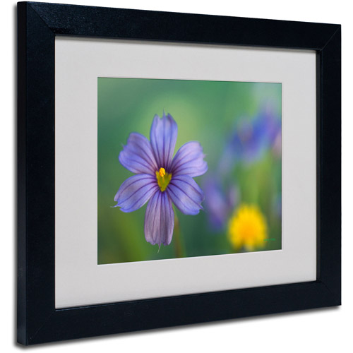 Trademark Fine Art 'Blue Eyed Grass' Matted Framed Art by Kathy Yates