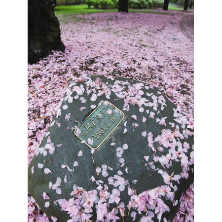 Spring Cherry Blossom, Brooklyn Botanical Garden, Brooklyn Print Wall Art By Christian Kober (Botanical Gardens Brooklyn Halloween)