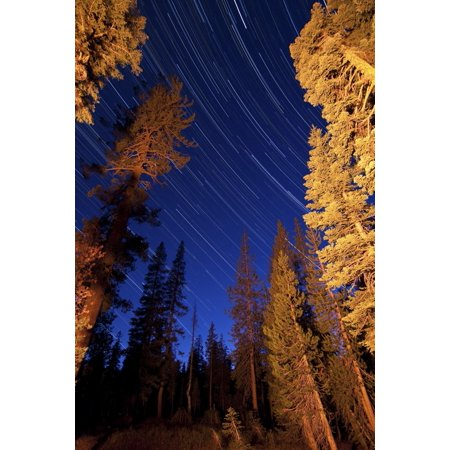 Star trails above the campfire lit pine trees in Lassen Volcanic National Park California Poster Print ()