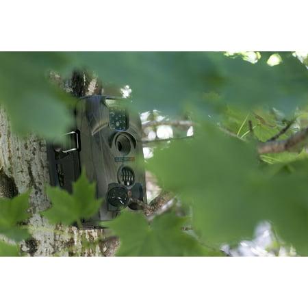 VGA/QVGA Trail Game Hunting Camera w/ Crisp Clear Full-Color Video - image 4 de 7