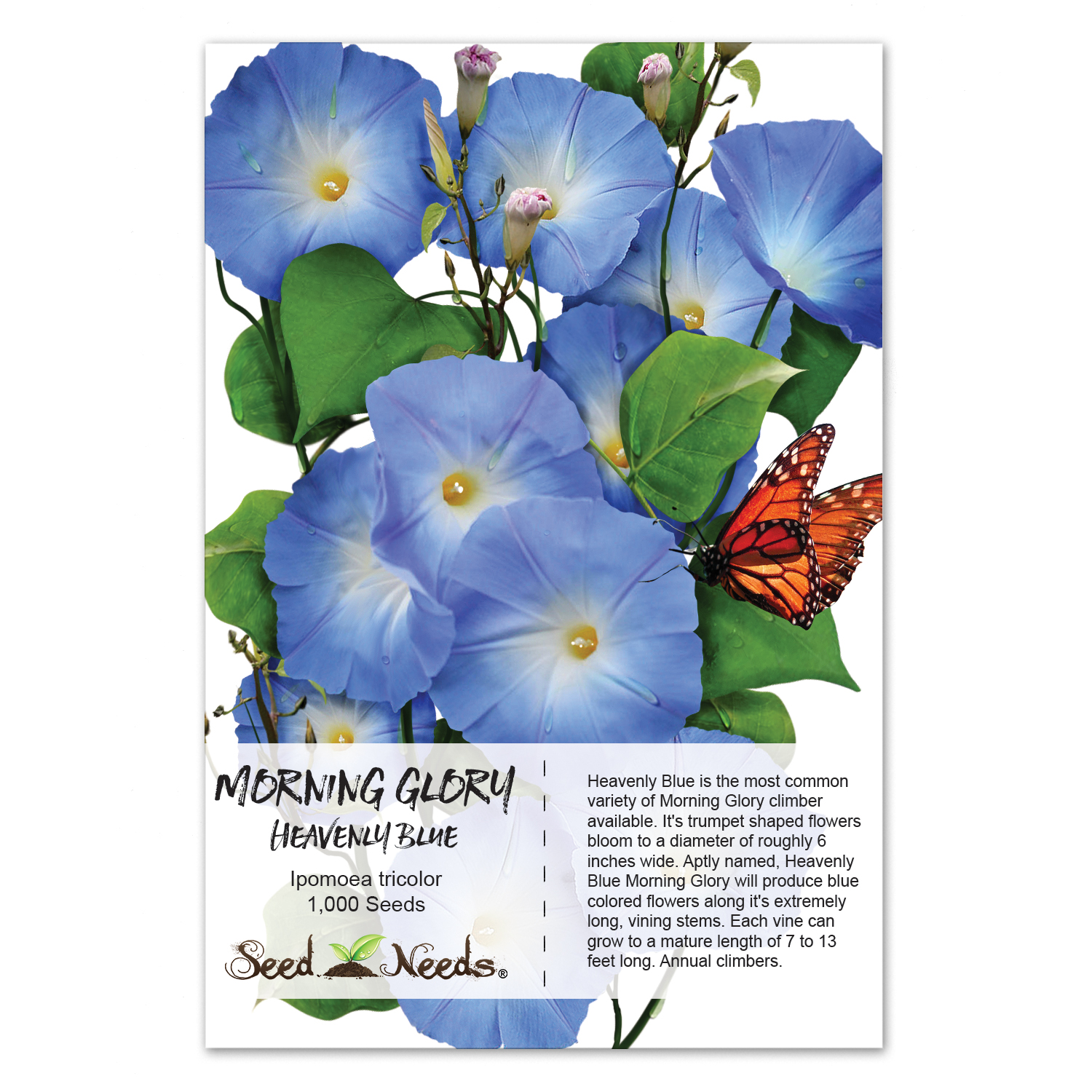 Packet Of 1 000 Seeds Heavenly Blue Morning Glory Ipomoea Tricolor Untreated Non Gmo By Seed Needs