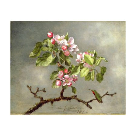 Apple Blossoms and a Hummingbird, 1875 Pink Flower Fine Art Botanical Painting Print Wall Art By Martin Johnson Heade