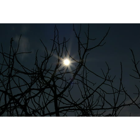 Canvas Print Horror Scary Night Fear Moon Dark Halloween Stretched Canvas 10 x 14