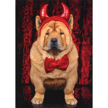 Avanti Press Devil Chow Dog Funny / Humorous Halloween - Halloween Photo Cards Target