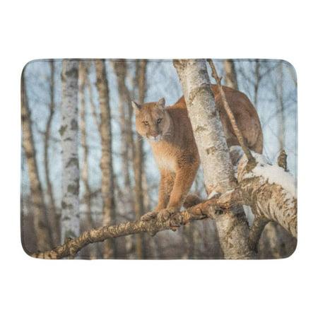 GODPOK Catamount Birch Adult Cougar Concolor Sits in Tree Captive Animal Cat Creature Rug Doormat Bath Mat 23.6x15.7 inch