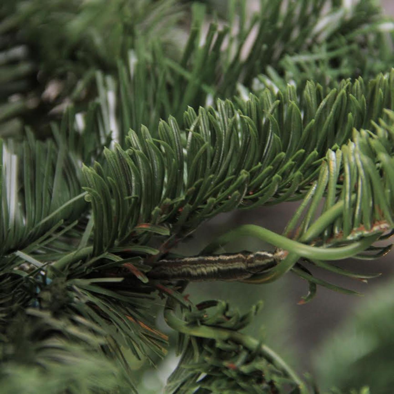6.5\' Layered Noble Fir Artificial Christmas Tree - Unlit - Walmart.com