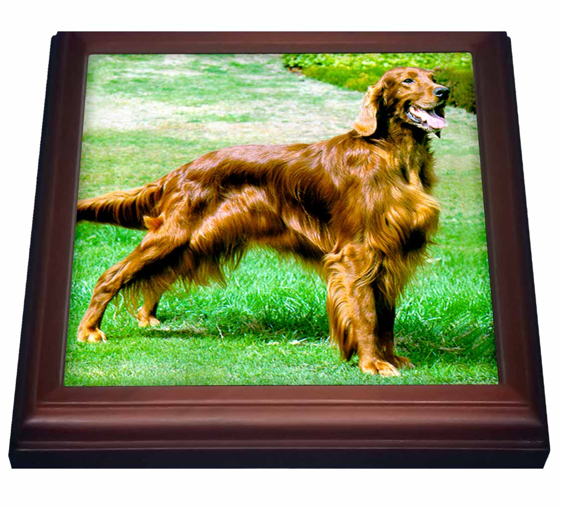 3dRose Irish Setter, Trivet with Ceramic Tile, 8 by 8-inch