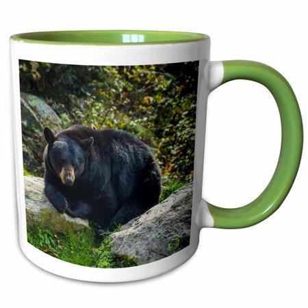 3dRose North Carolina, Grandfather Mountain State Park, Black Bear - Two Tone Green Mug, 11-ounce